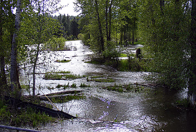bitterroot river flooding