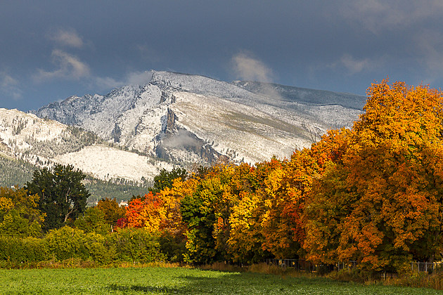 fall trees and mountain snow